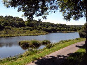 Le vieil étang du Guic